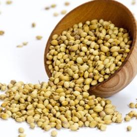 cilantro-seeds